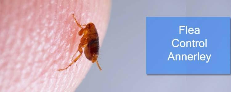 Flea Control Annerley