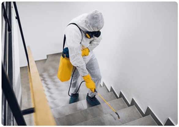 Locally Owned Pest Control Services Providers In Annerley